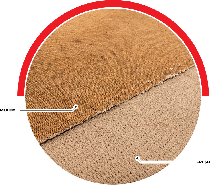 Carpet with Mold vs Fresh Carpet